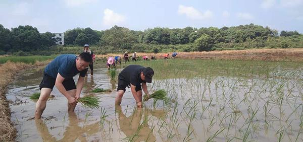 图为:徐永斌和村民正在农田里插秧