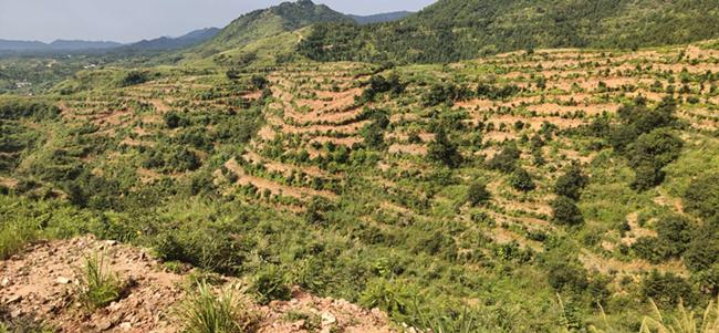 油茶种植区