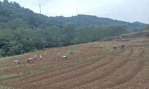 太空豆種植項目