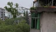 萍乡东大街:危树倾倒存隐患 及时伐树解民忧