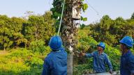 国网上饶市余干县供电公司:清理线路树障 确保供电安全
