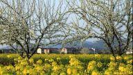 江西临川:生态旅游成经济发展新增长极