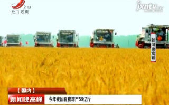 2019年中国夏粮增产59亿斤