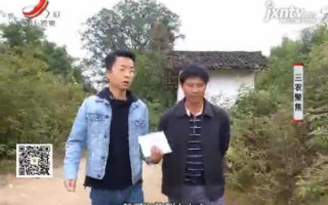 """三农聚焦20190809 """"一鸡一树""""打造脱贫致富之路"""