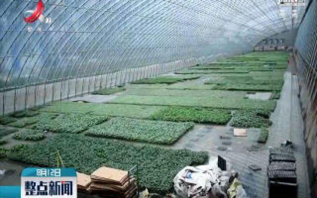 山东寿光:1.8万个蔬菜大棚进水