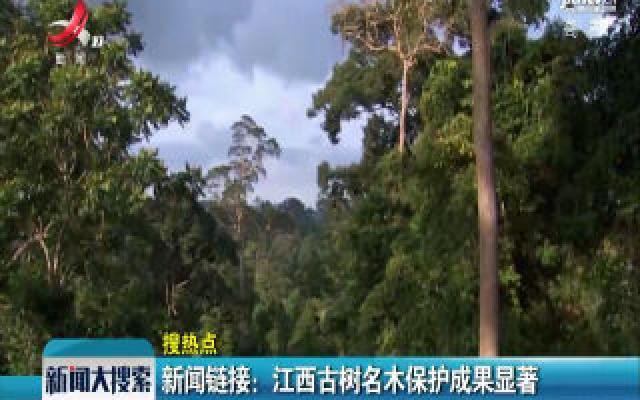 新闻链接:江西古树名木保护成果显著