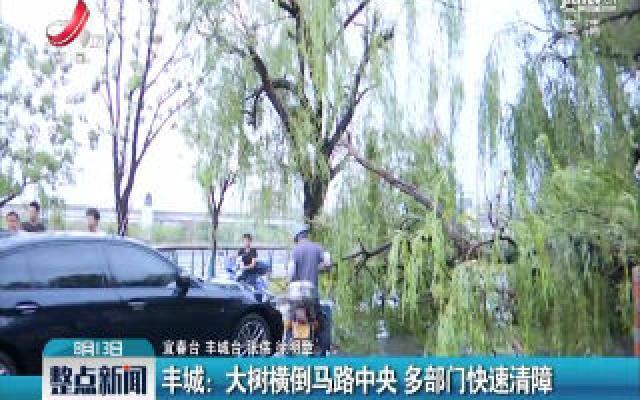 丰城:大树横倒马路中央 多部门快速清障