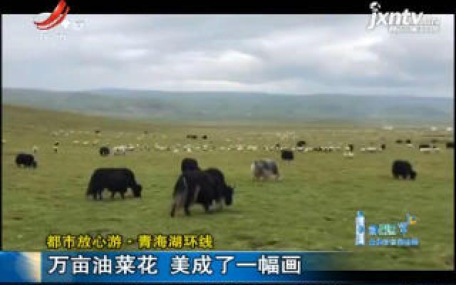 【都市放心游】青海湖环线:万亩油菜花 美成了一幅画