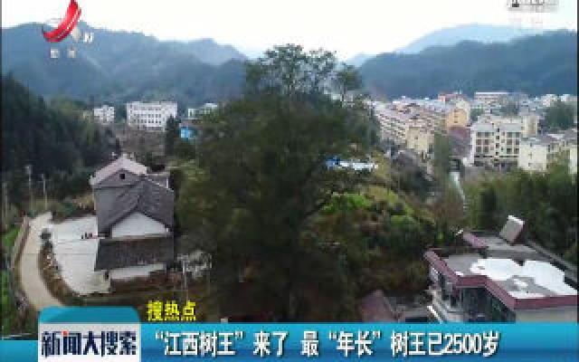 """""""江西树王""""来了 最""""年长""""树王已2500岁"""