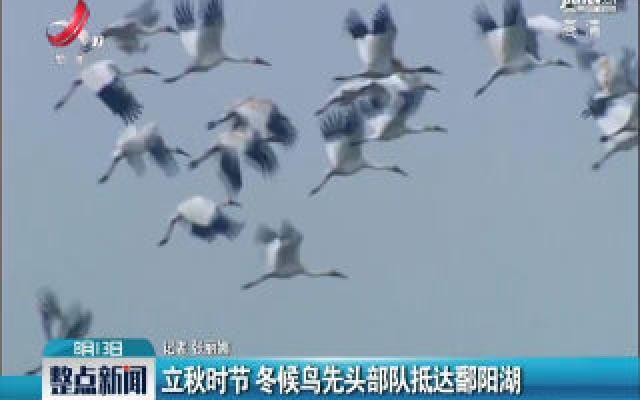 立秋时节 冬候鸟先头部队抵达鄱阳湖