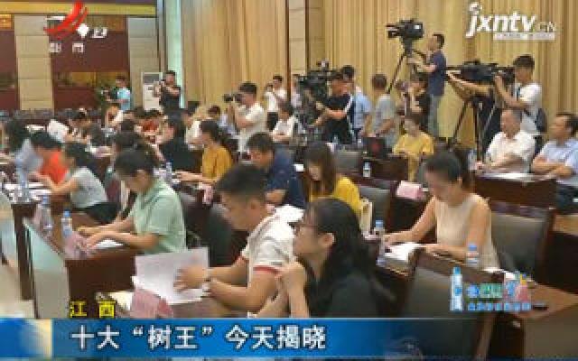 """江西:十大""""树王""""8月13日揭晓"""