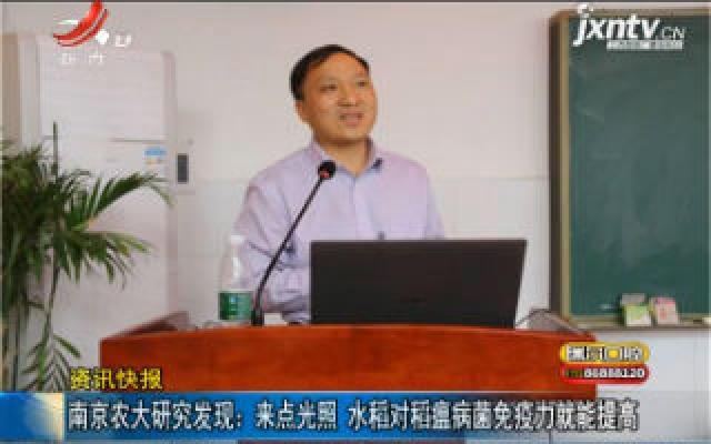 南京农大研究发现:来点光照 水稻对稻瘟病菌免疫力就能提高