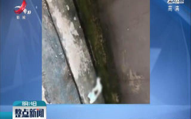 浙江杭州:16个月大男童从7楼坠落身亡