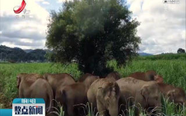 探访云南亚洲象检测预警中心