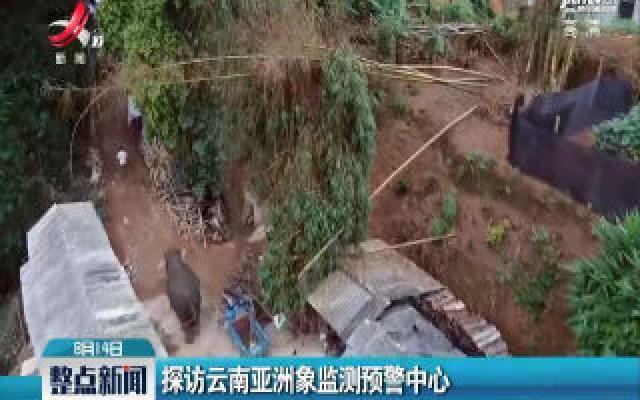 探访云南亚洲象监测预警中心