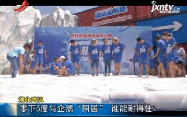 """湖北武汉:零下5度与企鹅""""同居"""" 谁能耐得住?"""