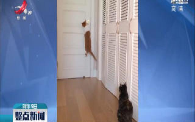 当猫星人有想法的时候