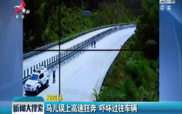 广东韶关:马儿误上高速狂奔 吓坏过往车辆