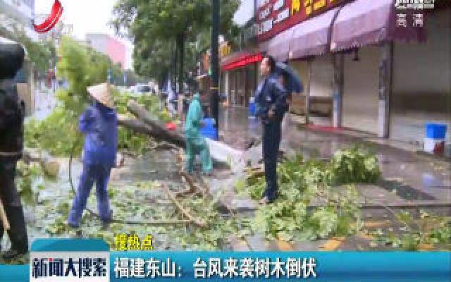 福建东山:台风来袭树木倒伏