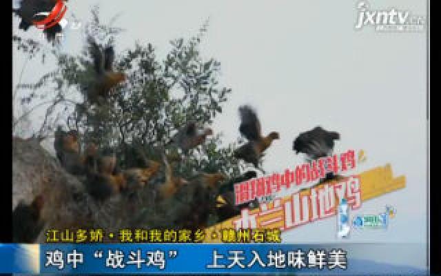 """【江山多娇·我和我的家乡·赣州石城】鸡中""""战斗鸡"""" 上天入地味鲜美"""