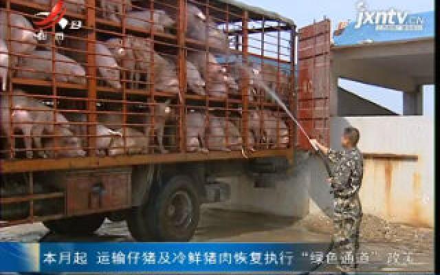 """9月起 运输仔猪及冷鲜猪肉恢复执行""""绿色通道""""政策"""