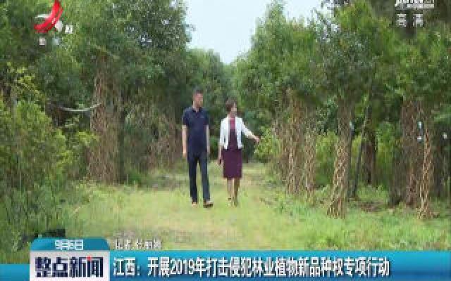 江西:开展2019年打击侵犯林业植物新品种权专项行动