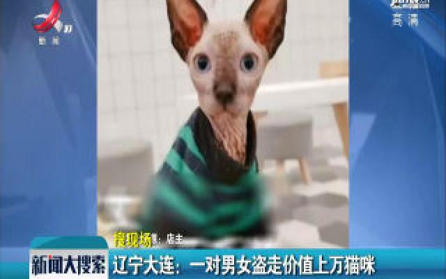 辽宁大连:一对男女盗走价值上万猫咪