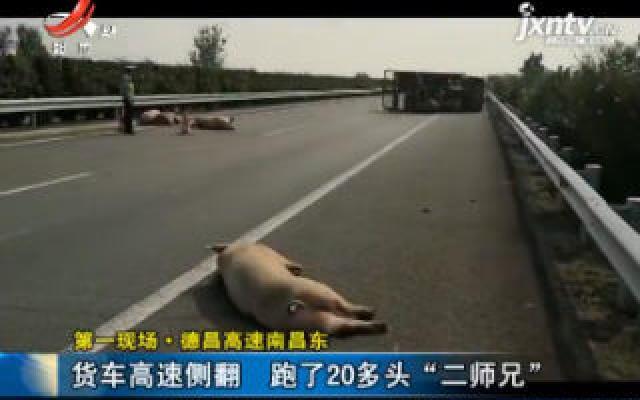 """德昌高速南昌东:货车高速侧翻 跑了20多头""""二师兄"""""""