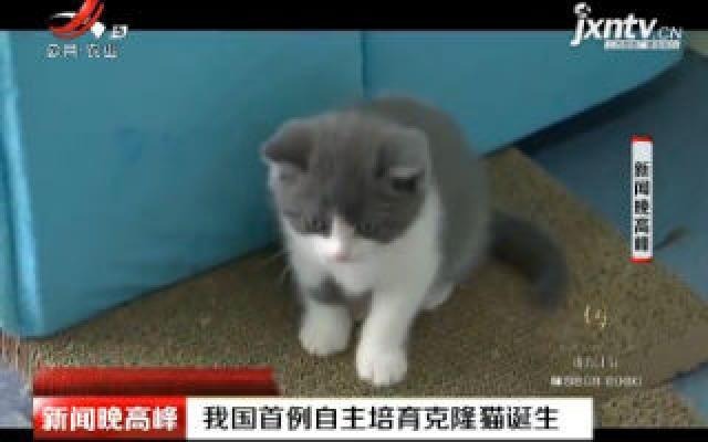 北京:中国首例自主培育克隆猫诞生