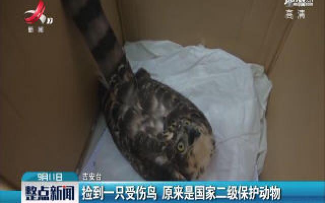 吉安:捡到一只受伤鸟 原来是国家二级保护动物