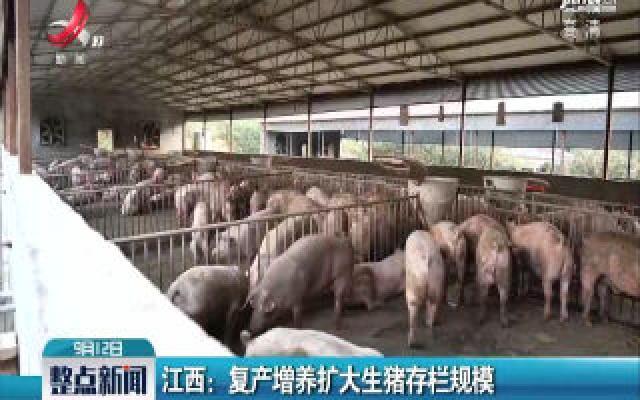 江西:复产增养扩大生猪存栏规模