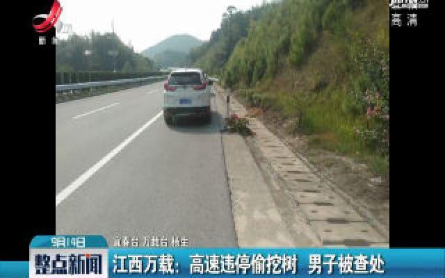 江西万载:高速违停偷挖树 男子被查处