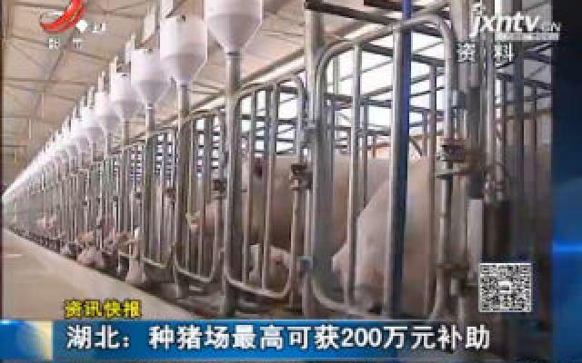 湖北:种猪场最高可获200万元补助