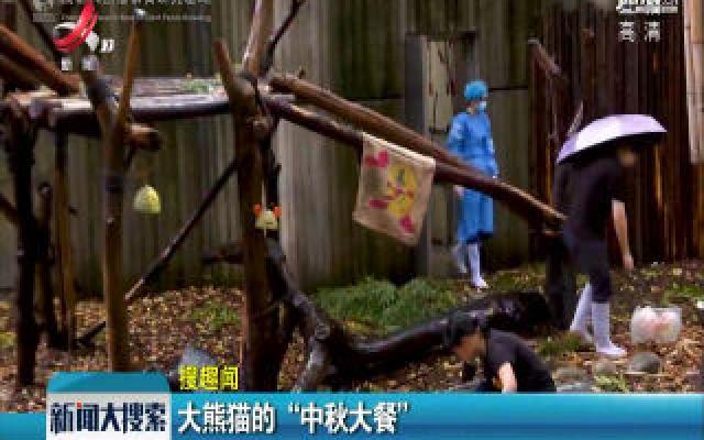 """成都:大熊猫的""""中秋大餐"""""""