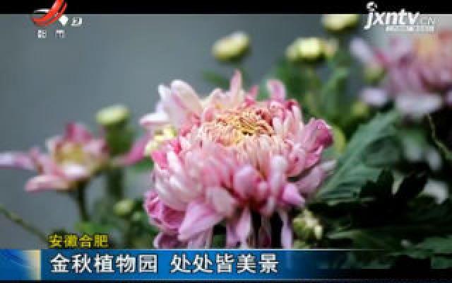 安徽合肥:金秋植物园 处处皆美景