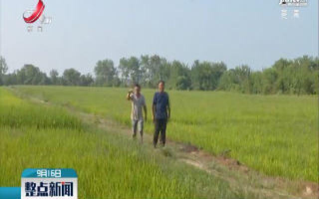 鹰潭:架设500多米跨河电缆 只为200余亩稻田不渴