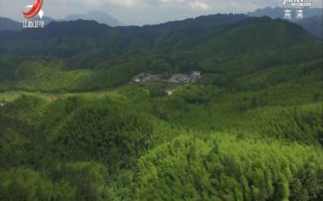 江西竹林面积突破1500万亩