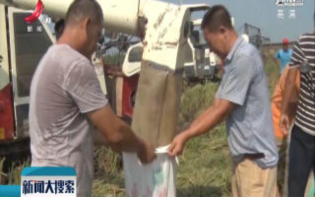 江西鄱阳:一季晚稻开镰收割