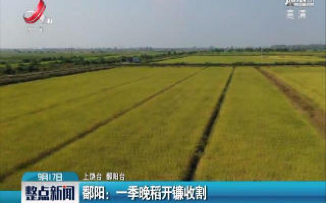 鄱阳:一季晚稻开镰收割
