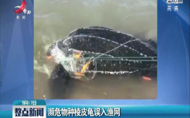 海南:濒危物种棱皮龟误入渔网