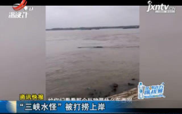 """安徽池州:""""三峡水怪""""被打捞上岸"""