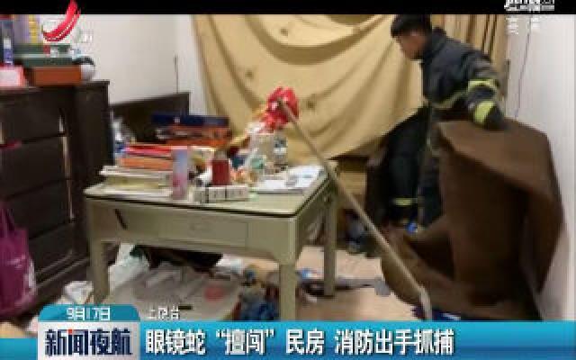 """上饶鄱阳:眼镜蛇""""擅闯""""民宅 消防出手抓捕"""