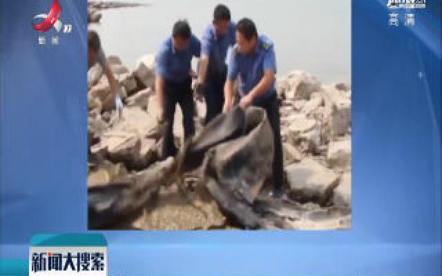 """安徽池州:""""三峡水怪""""被打捞上岸 系20米长橡皮气囊"""