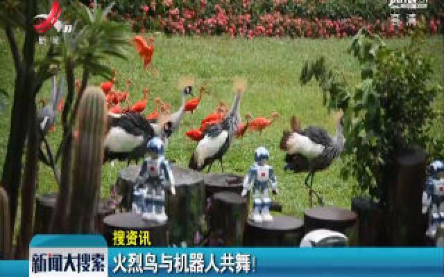 广州:火烈鸟与机器人共舞