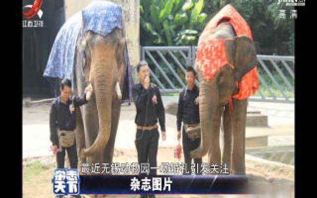 无锡动物园的两头大象喜结连理