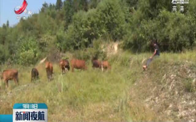 修水·程前冬:深山养殖开辟脱贫致富路