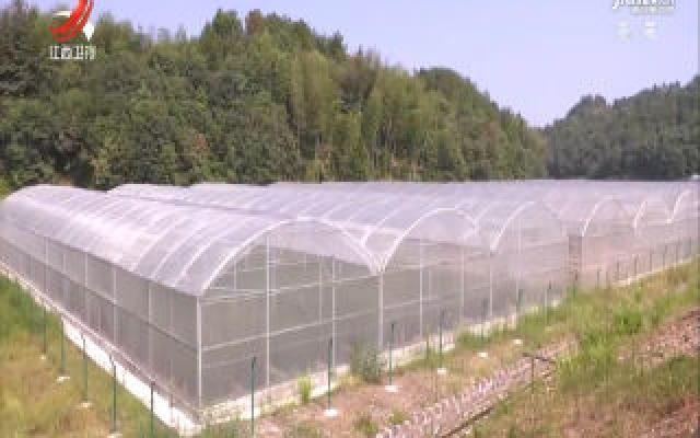南丰县建成柑桔无病毒苗木繁育基地