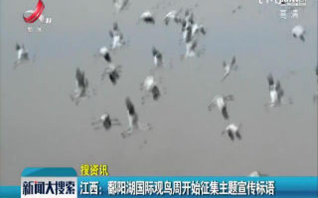 江西:鄱阳湖国际观鸟周开始征集主题宣传标语
