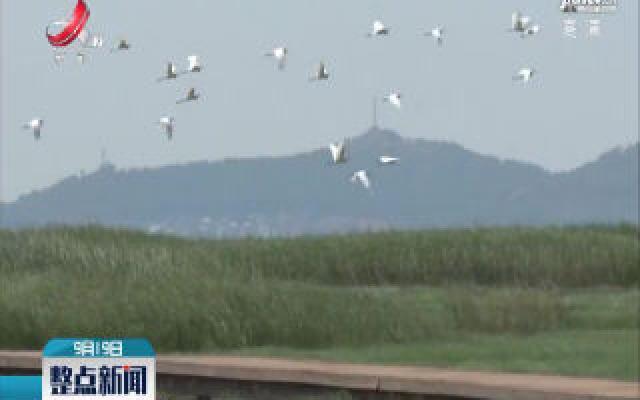 鄱阳:鄱阳湖湿地现江南大草原景观