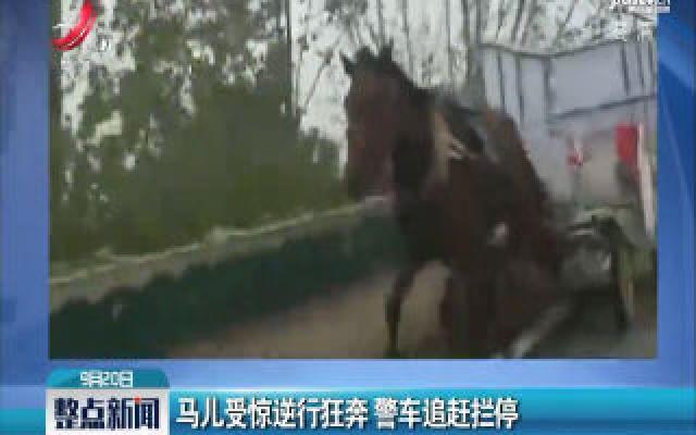 山东菏泽:马儿受惊逆行狂奔 警车追赶拦停